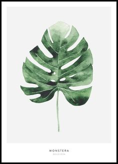 Olive Poster - Poster mit Olivenzweig in Aquarell - Posterstore.de Olive Poster - Poster mit Olivenzweig in Aquarell - Posterstore. Watercolor Plants, Watercolor Leaves, Watercolor Art, Leaf Drawing, Plant Drawing, Plant Painting, Plant Art, Impressions Botaniques, Poster Store