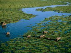 Elefantes Amboseli