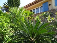 Main patio with cypress, palms, lavender and other plants. View from Middle earth way.