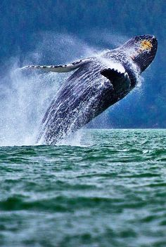 Jumping Whale by Stefan Georgiev