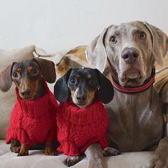 Hello do you like our sweaters?