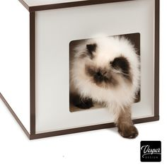 Catit Vesper Box Small - Compact cat furniture with a cozy sleeping cube - The Vesper Box Small is our compact cat furniture in a modern design. Equipped with a cozy sleeping cave, lounging spots, a ball toy, and a scratching pillar, it offers the nap and play tower cats dream of. #cats #furniture #design #homedecor #interiordesign