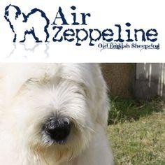http://www.airzeppeline.it/