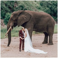 While I might be yearning after Kruger National Park, most of you reading this are either hoping to go for a weekend away to celebrate your honeymoon or might be in the beginning stages of planning your honeymoon for 2021, either way, we have some amazing advice on top spots to visit in South Africa for your romantic getaway. And where did we get this advice? From our amazing Instagram followers! #wanderlust #travel #elopement #honeymoon #hoorayweddings Mental Break, Kruger National Park, Weekends Away, Honeymoons, Romantic Getaway, Yearning, Wanderlust Travel, South Africa, Followers