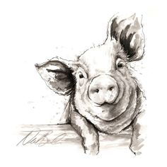 black and white pig drawing