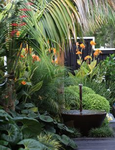 Tropical garden Ideas, tips and photos. Inspiration for your tropical landscaping. Tropical landscape plants, garden ideas and plans. Tropical Garden Design, Tropical Landscaping, Landscaping With Rocks, Landscaping Plants, Tropical Plants, Front Yard Landscaping, Landscaping Ideas, Landscaping Software, Tropical Gardens
