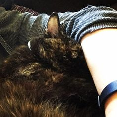 Day 211 of Project 365: Kitty snuggles.