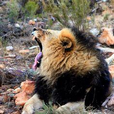 Luke de Villiers _ Photography #Luke de Villiers #Photography #Rasberydays #theotherbarman #Africa Luke, Brown Bear, Africa, Animals, Animales, Animaux, Animal, Animais, Afro
