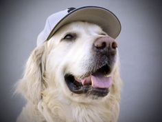 The Best Dog Names Inspired by Major League Baseball | Dogster via DoggieNames.com! ;)