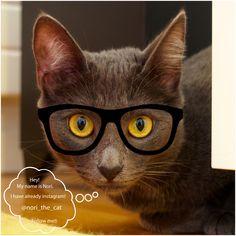 Nori no Instagram: https://instagram.com/nori_the_cat/ e ainda... webpage: http://nori-the-cat.tumblr.com