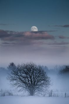 "Titled ""Moon"", also a lovely image of a frosty winter's night."