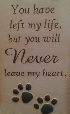 You have left my life, but you will NEVER leave my heart - RIP my dear cat…