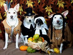 12 Thanksgiving Safety Tips for Pets | EntirelyPets