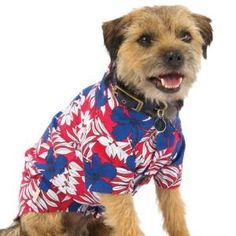 Your pet can sport the Tommy Bahama® Red Hib Shirt at any summer BBQ – PetSmart $19.99