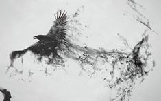 Raven Bird Art | collection great pictures, pure High Definition HD. You can download ...