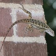 How to Keep Lizards Out of My House | eHow