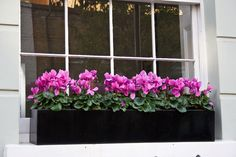 32 Beautiful Ideas Cascading Flowers For Window Boxes - Craft Home Ideas - Best Beautiful Cascading Flowers For Window Boxes Ideas 20 – Gongetech - Metal Window Boxes, Winter Window Boxes, Window Box Plants, Window Box Flowers, Balcony Flowers, Window Planters, Outdoor Flowers, Flower Boxes, Metal Planters