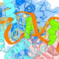 Fluoroquinolones - once effective anti-tuberculosis drugs - might rejoin our arsenal of anti-bacterial drugs perhaps even as effective options for other bacterial threats.