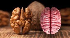 8 aliments qui soignent les organes auxquels ils ressemblent