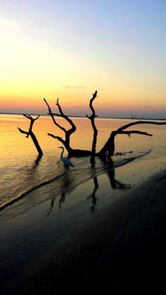 Deerfield Beach, Driftwood, Florida, Silhouette, Celestial, Sunset, Outdoor, Life, Beauty