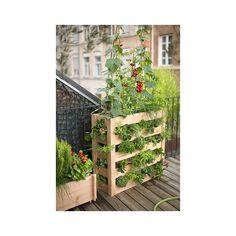 Potager vertical en bois Botanic - Botanic