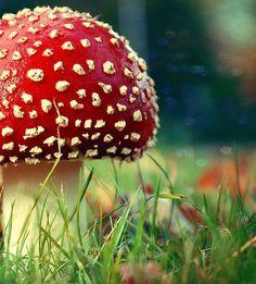 Mushroom ✿⊱╮ by VoyageVisuel