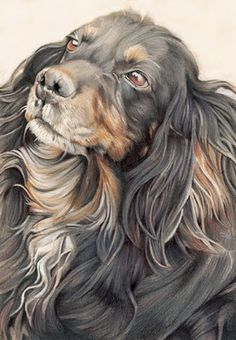 dog drawings  Colored Pencil. I wish I knew the name of the artist who drew this so I could credit them. This is fantastic. I love it because it looks like a dog I loved that has passed on!