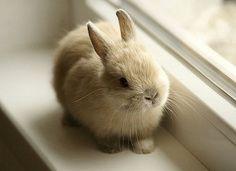 bun on windowsill