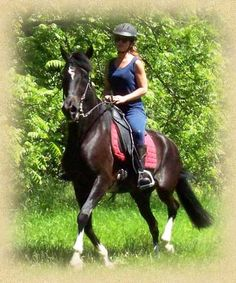 THIS is riding! Black Forest Saddles will take you anywhere your horse will.