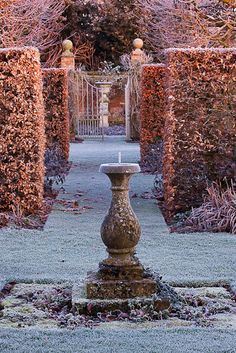 Crispy frosty Novembery beech hedges... A winter garden ~ Clive Nichols Photography