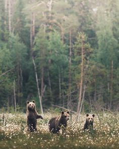 """90.8 k gilla-markeringar, 776 kommentarer - Konsta Punkka (@kpunkka) på Instagram: """"~ Three bear fellas enjoying the warm summer day. You can find this bear picture and many other un…"""" Art Love Couple, Bear Pictures, Fun Activities For Kids, Sad Girl, Love Painting, Cool Kids, Kids Fun, Panda Bear, Summer Days"""