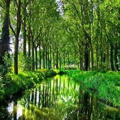 So much green 💚🍃 Where does this scene remind you of? I'd have to say my favourite part of my visit to Damme was leisurely strolling along the moat that once protected the town from invasion centuries ago. Today, poplar trees line the entire star-shaped waterline which makes for some great photo opportunities and relaxation! You heard it here first, but I think this lovely little spot will be an up-and-coming tourist destination in 2018 😉 Do you agree? I'll explain why soon, so stay tuned…