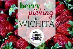Berry Picking in Wichita | Wichita Moms Blog