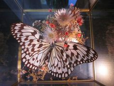 Paper Kite Butterfly Glass Box Diorama $26