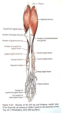 Animal Anatomy, Safe For Work, Anatomy Reference