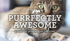 Three Fabulous Feline-Finds for Your Home