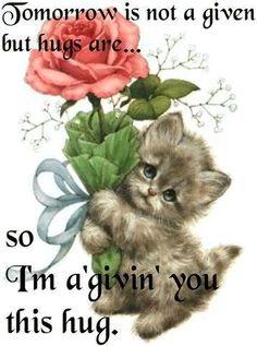 giving you a hug quotes cute quote hugs image quotes picture quotes Hugs And Kisses Quotes, Hug Quotes, I Need A Hug, Love Hug, Good Morning Hug, Morning Cat, Hug Pictures, Hug Images, Kitten Images