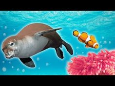 Ocean Animals for Kids - Whales, Sea Otter, Orca, Sea Lion + Ocean Animals For Kids, Dolphins For Kids, Sharks For Kids, Arctic Animals, Jungle Animals, Baby Animals, Creative Commons Pictures, Animal Atlas, Science Videos For Kids
