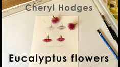 Video detailing how to paint pink eucalyptus flowers, in a botanical art style.