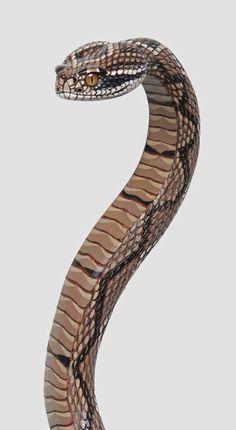 Wood Carved Rattlesnake Walking Cane by StinnettStudio on Etsy, $535.00