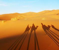 Kamel reiten - Sahara