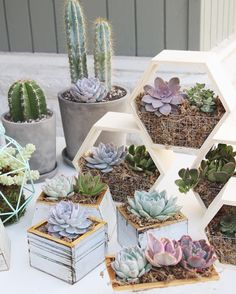 almost ready for the Carlsbad Street Fair! here's a little sneak peak of some of the items we will have for sale. we will also have geometric terrariums, terrarium necklaces with living plants inside, airplants, succulent and cacti embroideries, kokedamas Types Of Succulents, Cacti And Succulents, Planting Succulents, Planting Flowers, Suculentas Diy, Cactus Y Suculentas, Multiplier Des Plantes Grasses, Cactus Embroidery, Decoration Plante