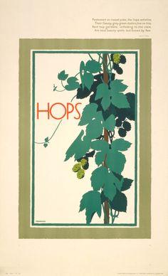 Hops by Frank Newbould