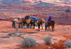 Grand Canyon Horse Pack Trips