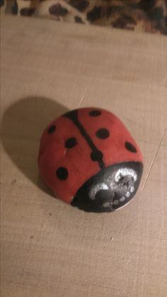 Kő katica.