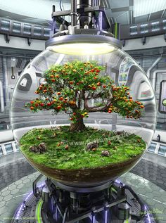 Could do this with a bonsai tree Mini Terrarium, Terrarium Scene, Terrarium Plants, Glass Terrarium, Bonsai Plants, Ideas Florero, Garden Art, Garden Design, Indoor Water Garden