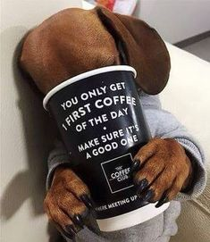 "dachshund♡""You only get 1 first coffee of the day. Dachshund Funny, Dachshund Puppies, Weenie Dogs, Dachshund Love, Funny Dogs, Cute Puppies, Cute Dogs, Daschund, Doggies"