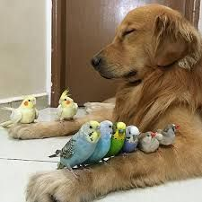 Bildresultat för vänskap djur
