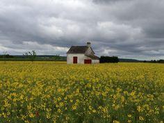 Farmhouse in the field of flowers, Loire, FR
