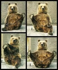Bears doing Pilates, awww.